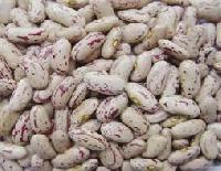 Speckled Kidney Bean