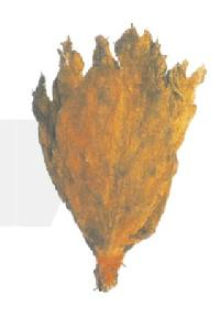 Lanka Tobacco