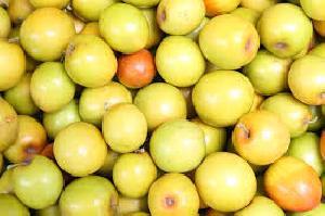 Fresh Jujube Fruit