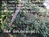 Red Sandalwood Medium