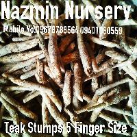 Teak Stumps Big Size