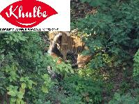 Jim Corbett National Park Tour Package 3 Night 3 Days