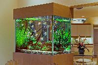 Customize Freshwater Aquarium