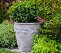 Decorative Terracotta planters