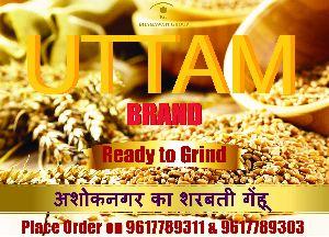 Uttam Brand Premium Quality Sharbati Wheat Seeds
