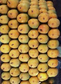 Fresh Alphas Mango