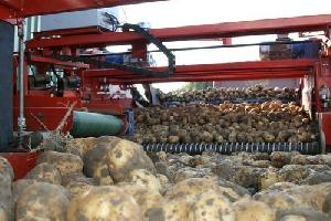 Potato Size Grader