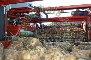 Potato Size Grader