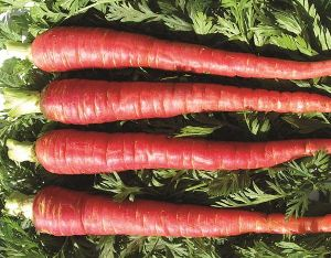 Red Carrot Seeds