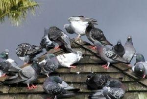 Bird Control Services