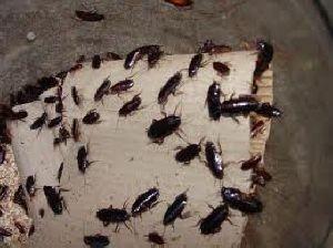 Cockroach Control Services