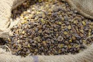 Sal Seed