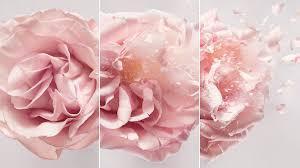 Fresh Marcel Flowers