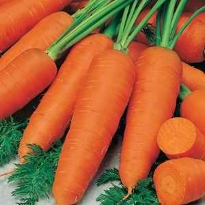 Carrot Topweight  seed pack