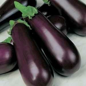 Eggplant Early Prolific  Seed  packs