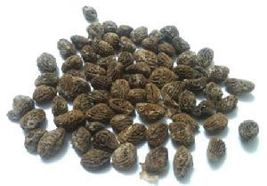 Iboga Seeds