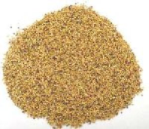 Rapeseed Oil Seeds
