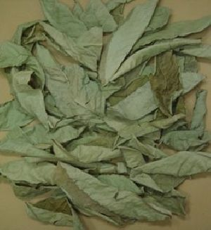 Dried Banaba Leaves