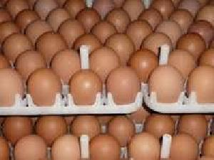 Table Chicken Eggs Good Quality