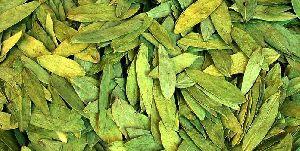 Senna Dry Leaves