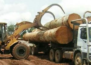 mahogany timber logs
