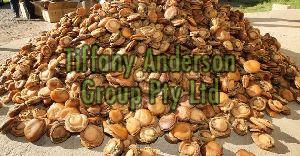 Dried Abalone,Dried seafood abalone