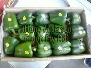 Fresh Capsicum ( Red,Yellow,Green )