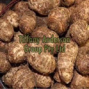 Fresh New Crop Big Taro,Taro Root,Fresh Colocasia Root