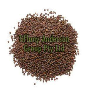 Mustard Seeds (Pale Yellow, Brown & Black)