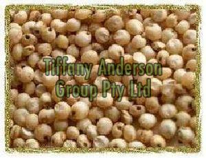 Sorghum Seeds,Sorghum Seeds for sale