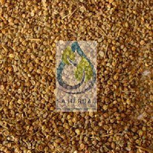 Apium Graveolens Seed Extract