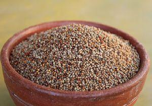 Millet Seeds