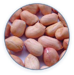 Groundnut Seed