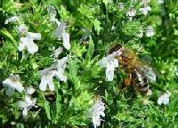 Medicinal Aromatic Plants