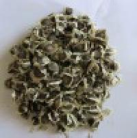 Fresh Moringa Hybrid Propogation Seeds