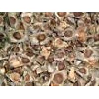 Medicinal Moringa Seed