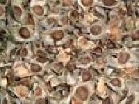 Moringa Seed Plantation