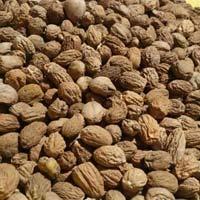Nutmeg Shrivelled