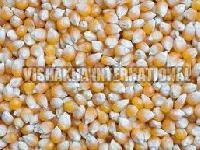 Maize Product