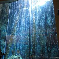 Night Aquarium