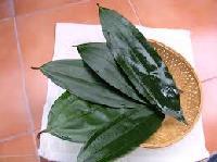 Malabar Leaf