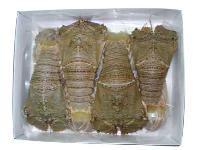 Sand Lobster