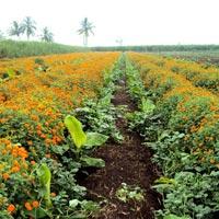 Integrated Organic Crop Management