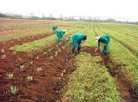 Farming Services
