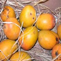 Fresh Alphonso Mangoes