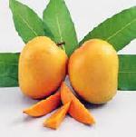 Alphonso Ripned mango