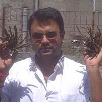 Safed Musli Planting Material