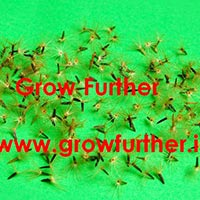 Seeds of Stevia