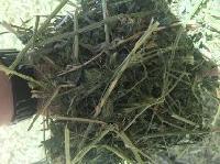 Alfalfa Grass Of Usa Origin