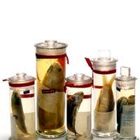 Glass Specimen Jars